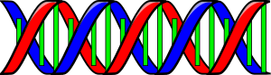 Anonymous-Double-Helix-DNA-300px
